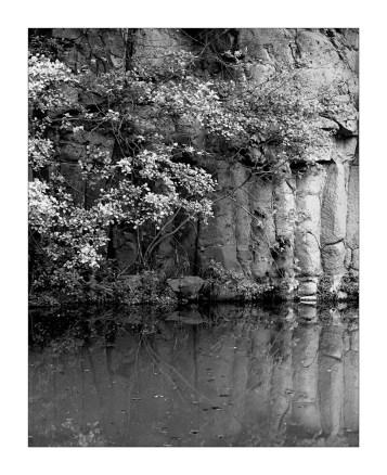 Basalt columns emerging from the Fluvià River shore.
