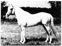 Azkar 1938 AHC 1109 (Rahas x *Aziza)