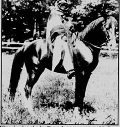 *Hamrah, a desert-bred stallion and major progenitor of the Davenport legacy.