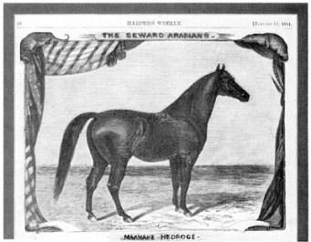 Mannake Hedroge (Seward)