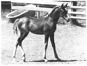 May filly at 2 1/2 months ex Mostly Magic by *Touch of Magic.