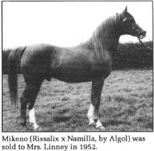 Mikeno (Rissalix x Namilla, by Algol) was sold to Mrs Linney in 1952.