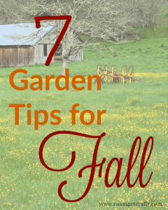 7 Garden Tips For Fall