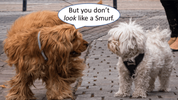 "One dog says to another dog, ""But you don't look like a Smurf."""