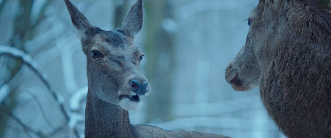 Resultado de imagen para oh body and soul netflix deer