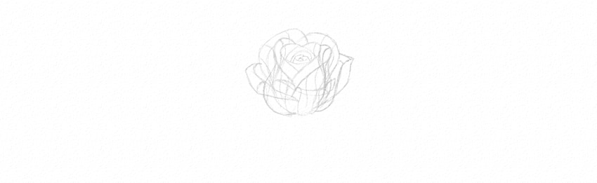 how to draw a half blown rose