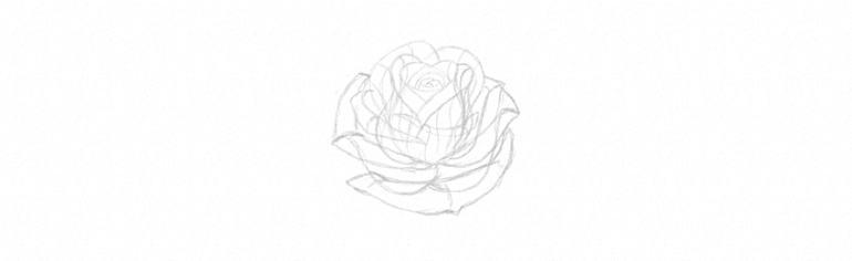 how to sketch rose petals