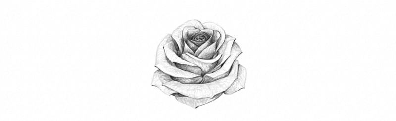How to draw a rose up close howsto how to draw a rose ccuart Image collections