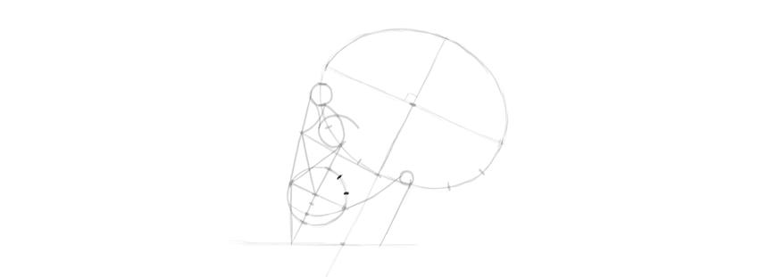 desenho proporções da mandíbula superior do crânio