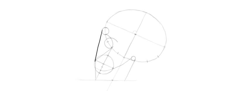 proporções do nariz do crânio