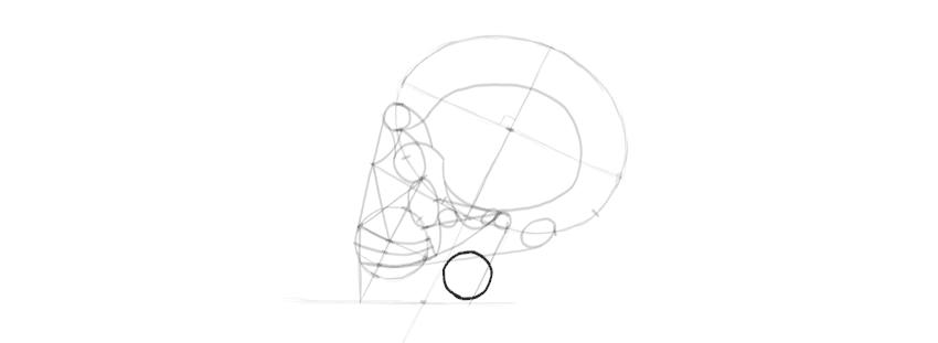 desenho caveira mandíbula detalhes