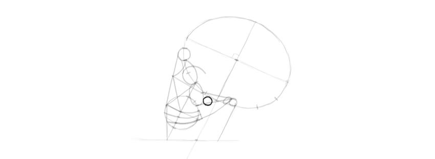 desenho detalhes do crânio do osso da bochecha