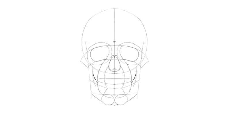 human skull lower jaw bottom