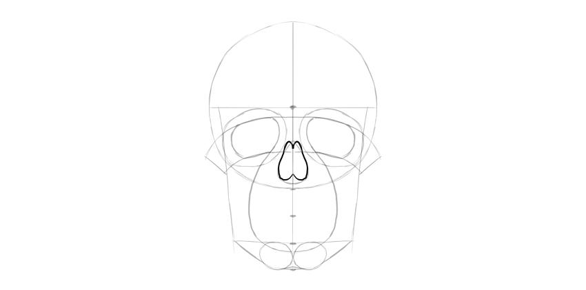 forma detalhada do nariz do crânio humano
