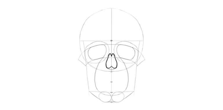 human skull nose detailed shape