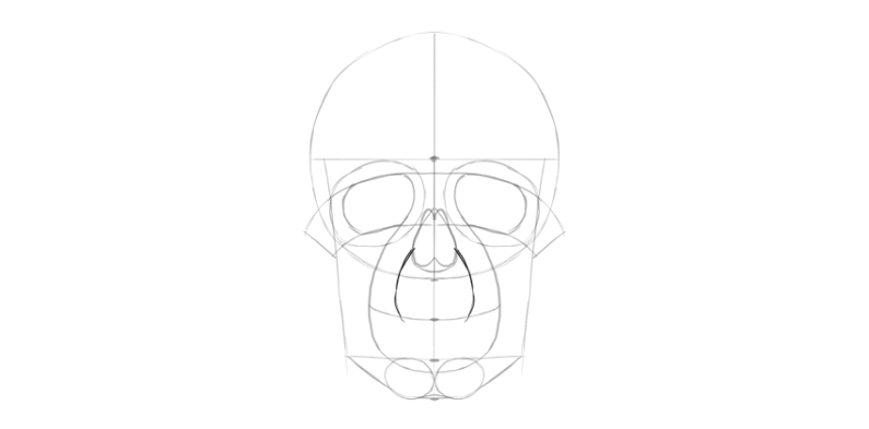 human skull upper mouth area