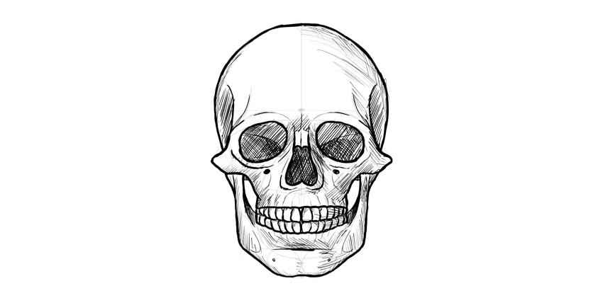 contorno escuro do crânio humano