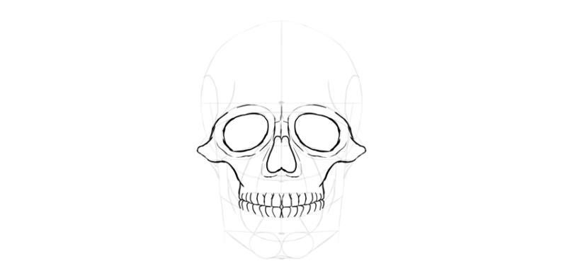 human skull teeth outline