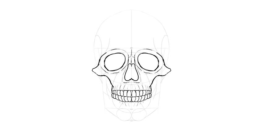 detalhe de dentes de crânio humano