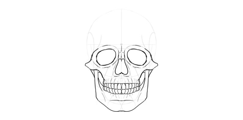 human skull lower jaw outline