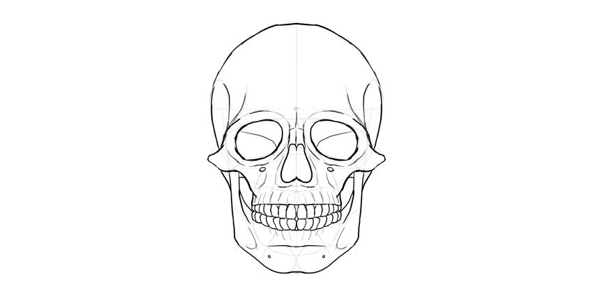 contorno do crânio humano detalhes