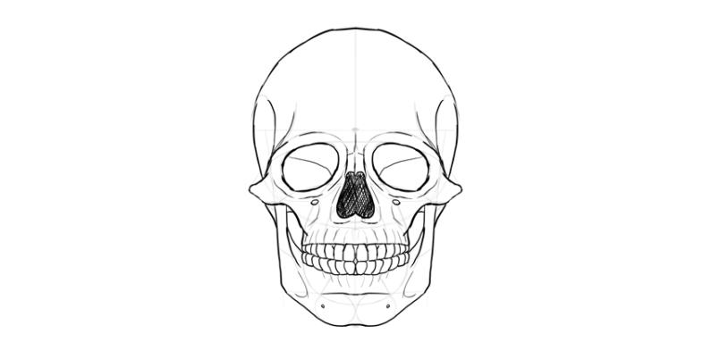 human skull nose shaded