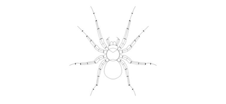 spider drawing spider legs