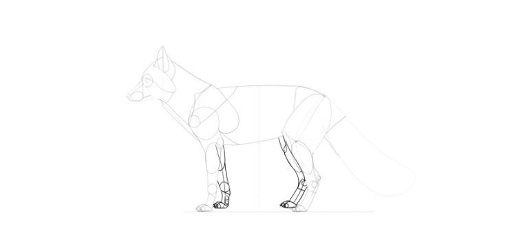 fox second pair if legs drawing
