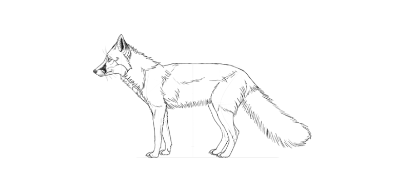 draw fox fur