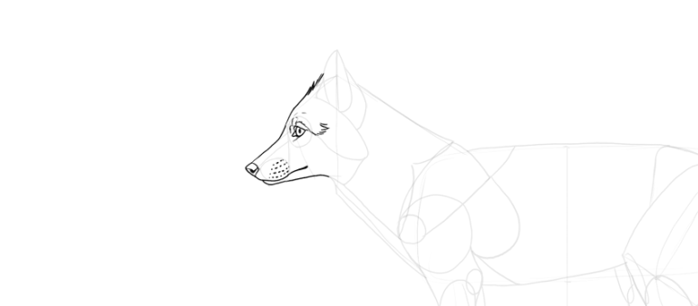 draw fox facial expression