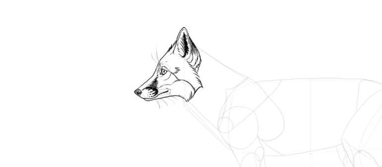 draw fox face markings