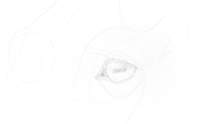 horse eye basic shading