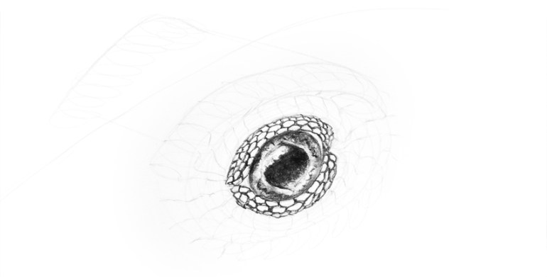 lizard 3d form of the eye