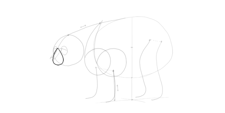 bear drawing simple muzzle
