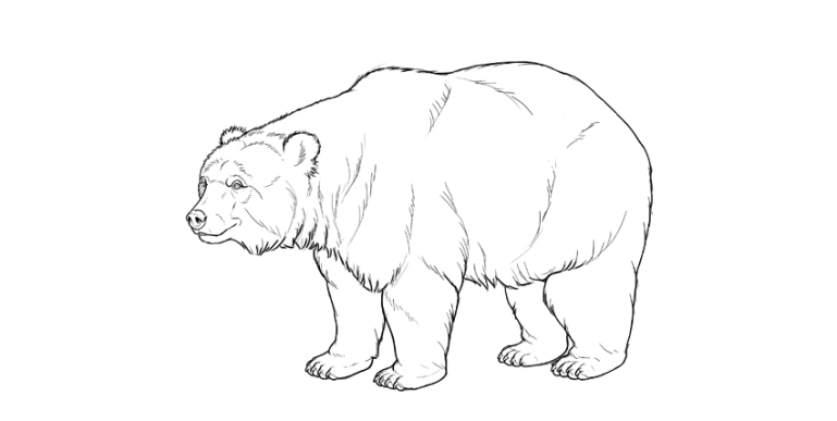 bear drawing dark outline