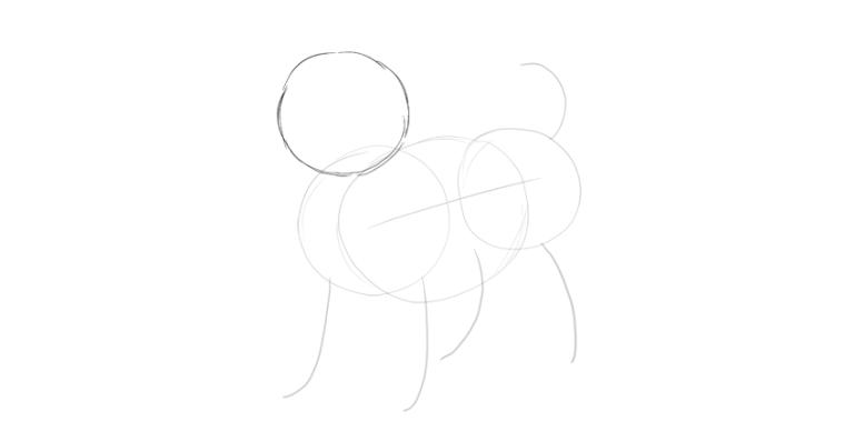 puppy circular head
