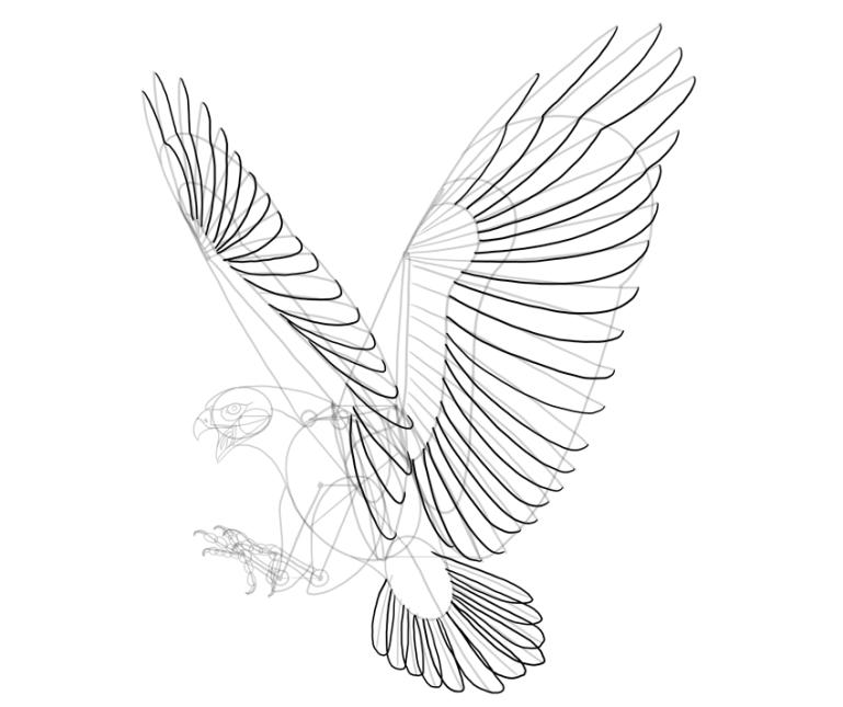 hawk half feathers
