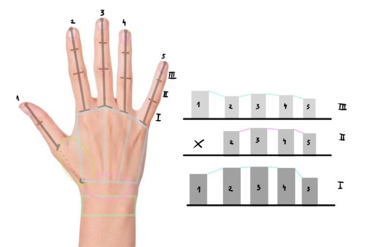 hand phalanges length