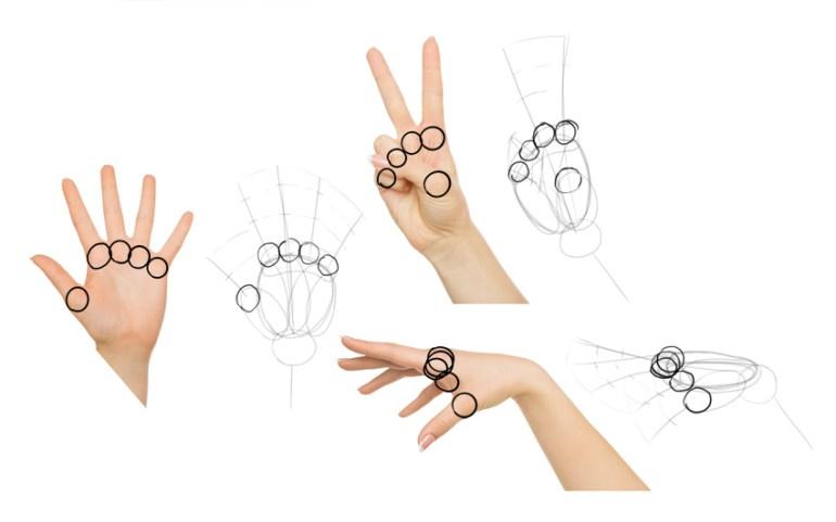 draw finger base