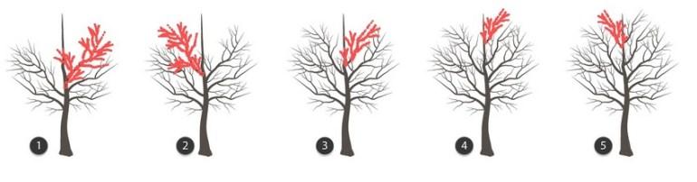 finish tree