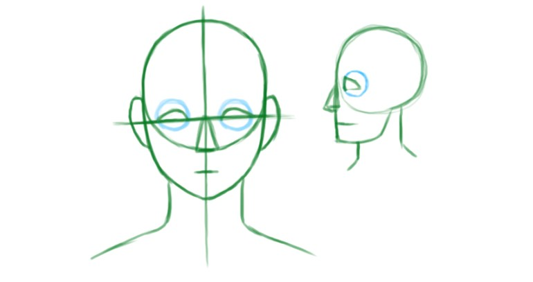 Gauging the proportions of the face