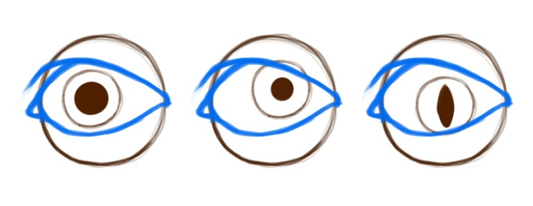 Example of iris and pupil variation