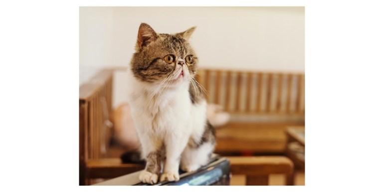The original image of the cat