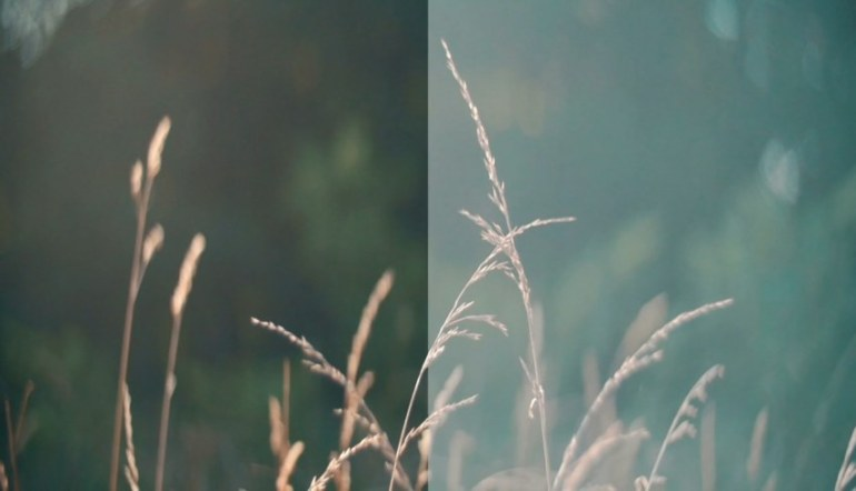 Image of grass before and after applucation of a film LUT