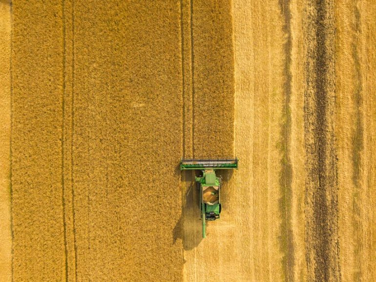 Combine harvester gathers the wheat at sunset