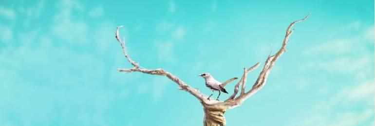 add bird 1