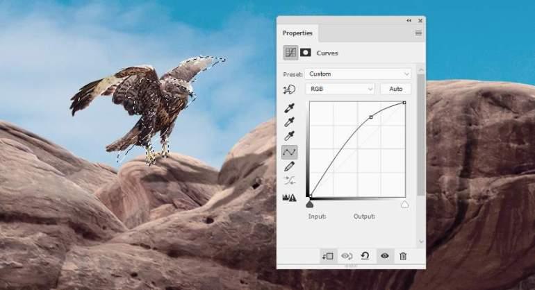 Photoshop Adjustment Layers  - hawk 1 curves
