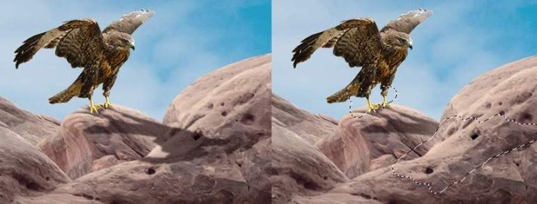 Photoshop Adjustment Layers  - hawk 1 shadow 1
