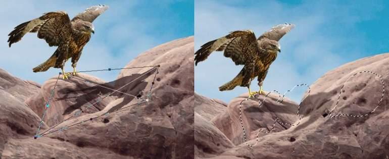 Photoshop Adjustment Layers  - hawk 1 shadow 2