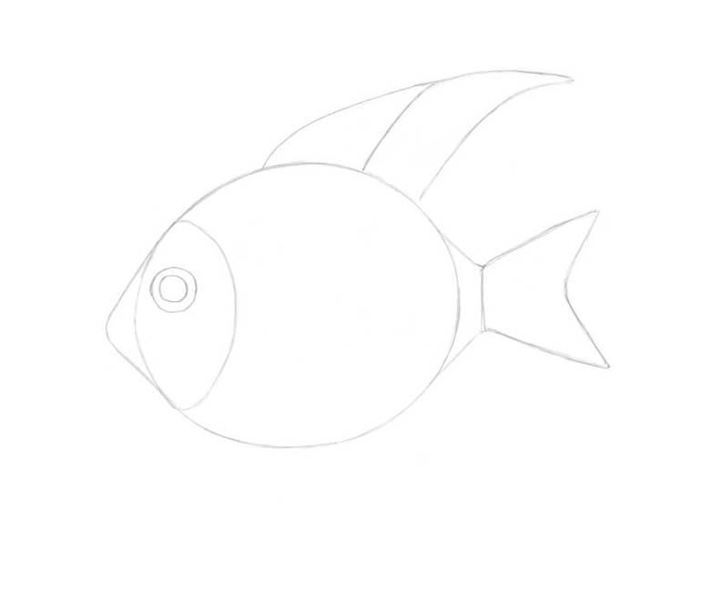 Adding the second segment of the dorsal fin